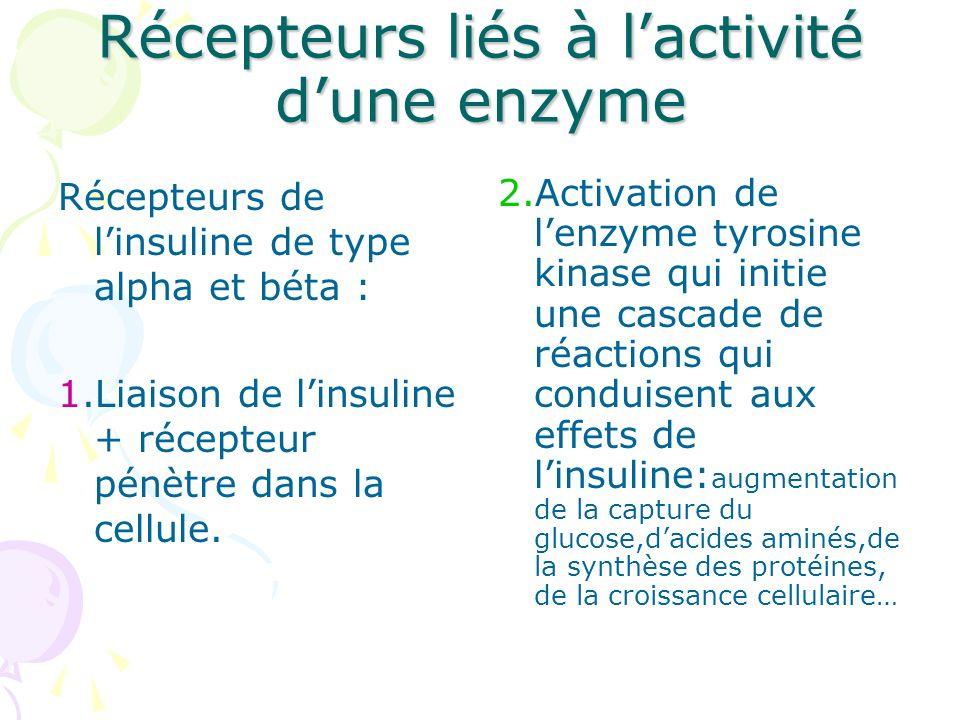 Récepteurs liés à lactivité dune enzyme Récepteurs de linsuline de type alpha et béta : 1.Liaison de linsuline + récepteur pénètre dans la cellule. 2.