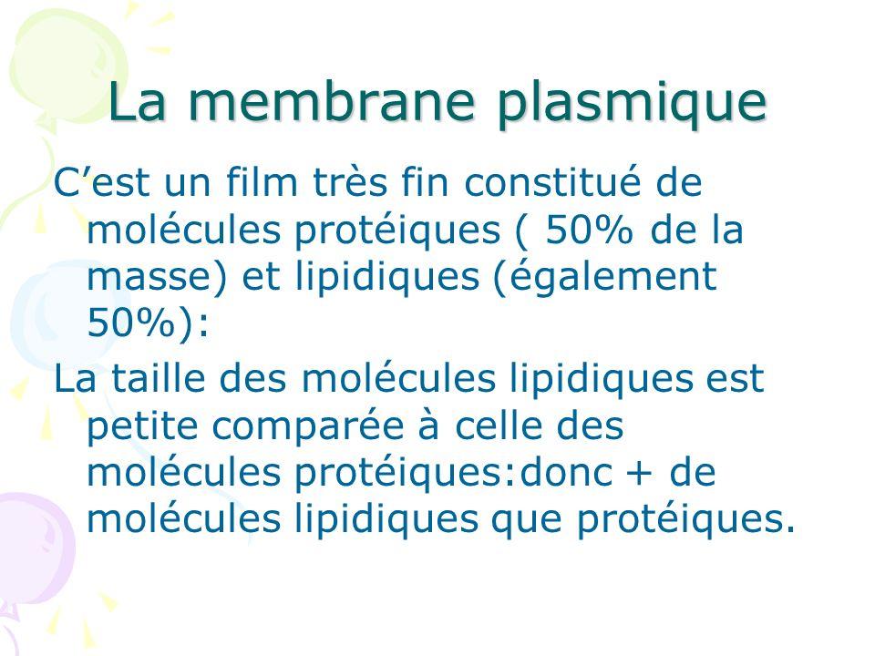 La membrane plasmique Cest un film très fin constitué de molécules protéiques ( 50% de la masse) et lipidiques (également 50%): La taille des molécule