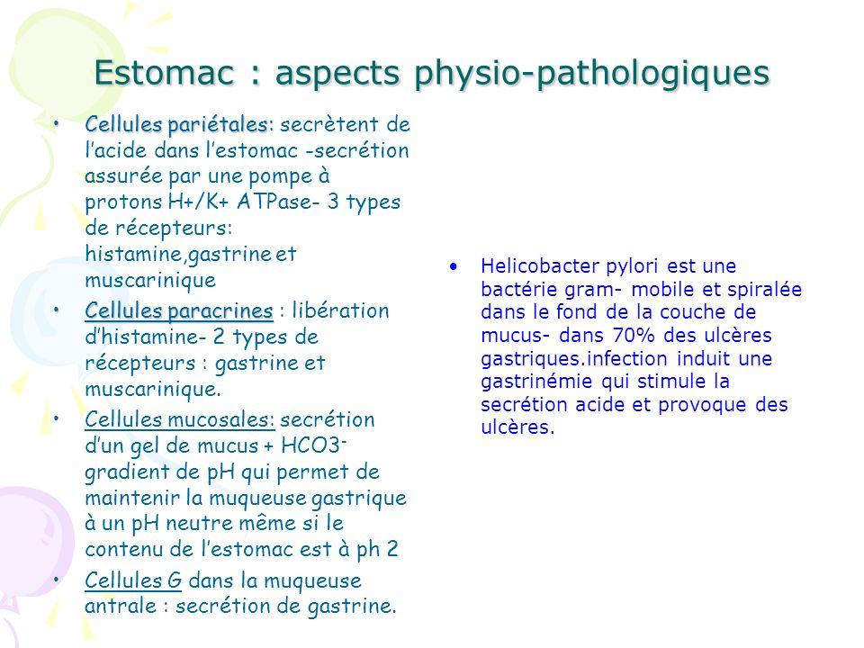 Estomac : aspects physio-pathologiques Cellules pariétales:Cellules pariétales: secrètent de lacide dans lestomac -secrétion assurée par une pompe à p