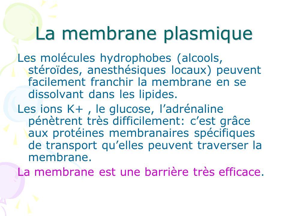 Les molécules hydrophobes (alcools, stéroïdes, anesthésiques locaux) peuvent facilement franchir la membrane en se dissolvant dans les lipides. Les io