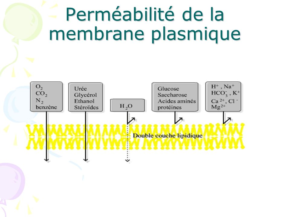 Les fonctions des protéines de la membrane Echange sélectif de la matière : transports membranaires, canaux ioniques, protéines impliquées dans lexocytose (Dans ce cas des particules destinées à être excrétées hors de la cellule sont entourées dans une vésicule) et lendocytose ( Des particules ou molécules peuvent aussi pénétrer dans la cellule par endocytose ) ET Adhérence à la matrice extracellulaire Connexion avec le cytosquelette Réception des signaux extracellulaires Transduction du signal par les molécules effectrices: protéines G Support dactivité enzymatique
