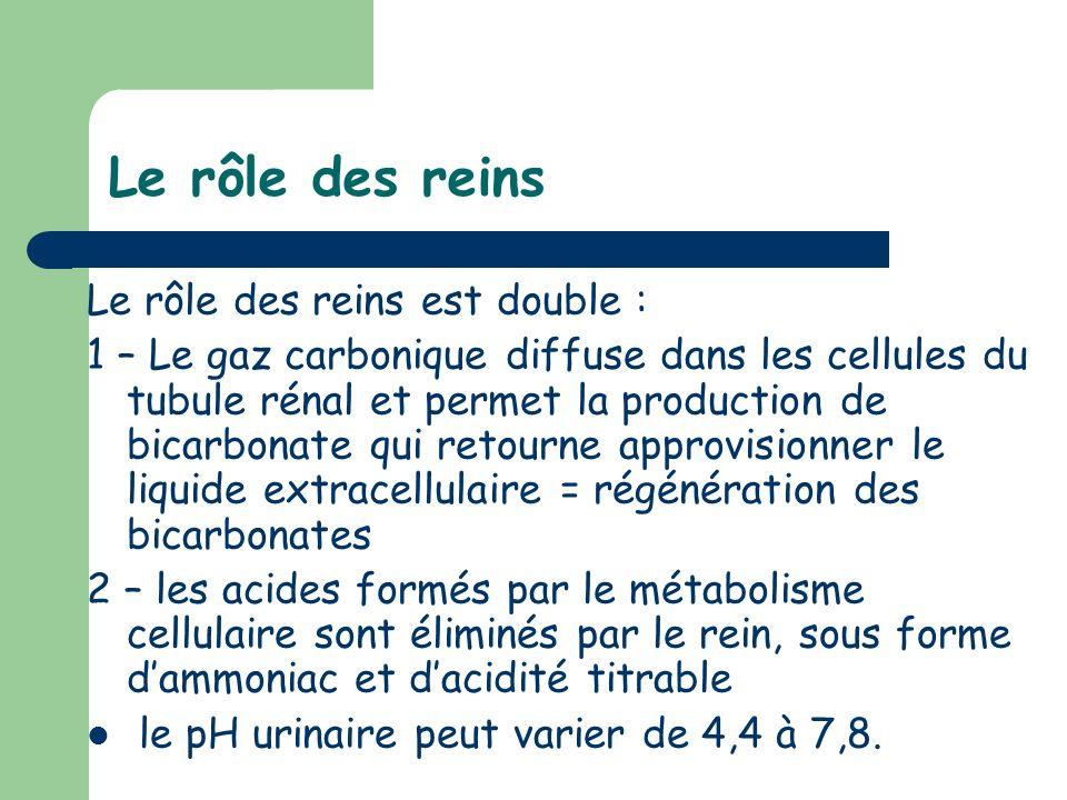 Le rôle des reins Le rôle des reins est double : 1 – Le gaz carbonique diffuse dans les cellules du tubule rénal et permet la production de bicarbonat