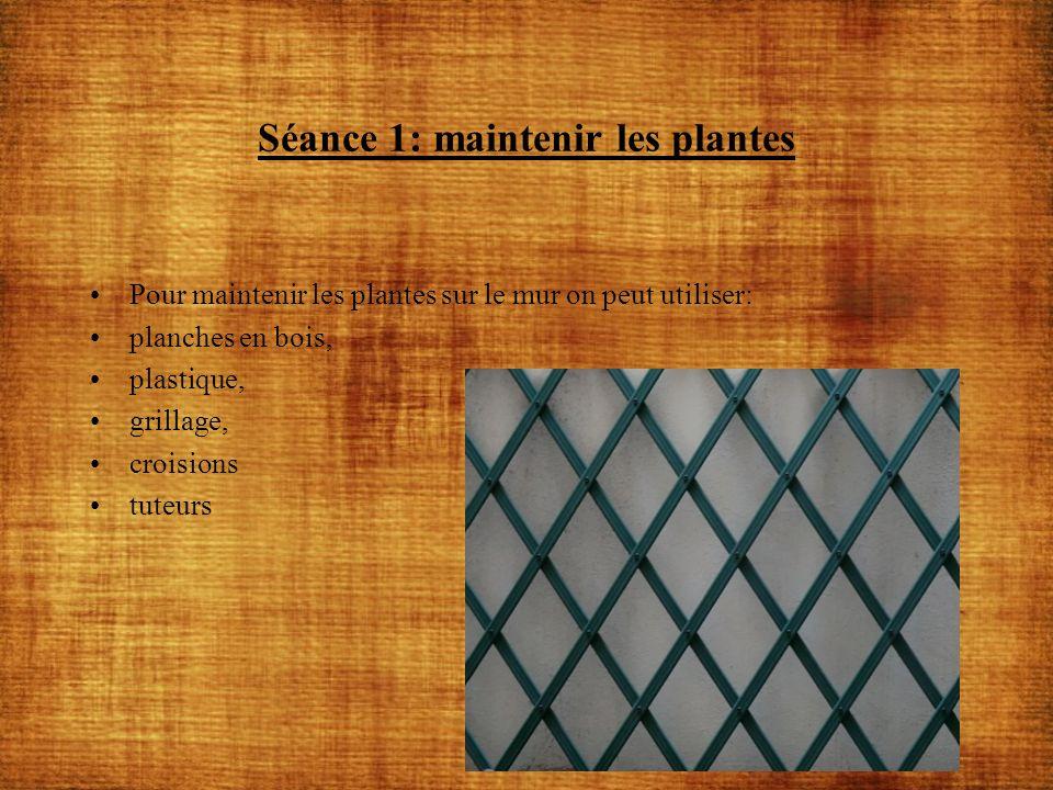 Séance 1: maintenir les plantes Pour maintenir les plantes sur le mur on peut utiliser: planches en bois, plastique, grillage, croisions tuteurs