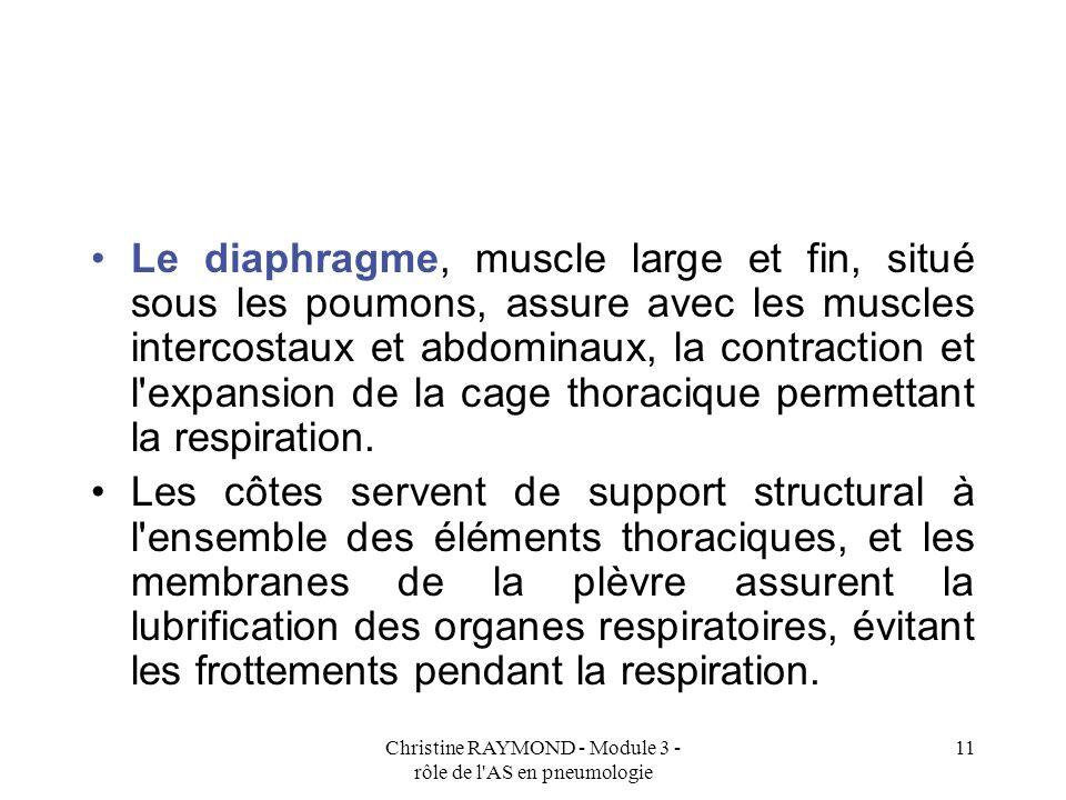 Christine RAYMOND - Module 3 - rôle de l AS en pneumologie 11 Le diaphragme, muscle large et fin, situé sous les poumons, assure avec les muscles intercostaux et abdominaux, la contraction et l expansion de la cage thoracique permettant la respiration.