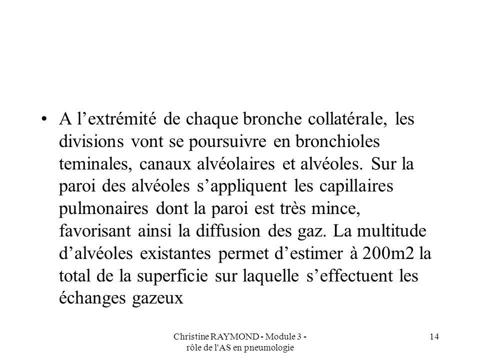 Christine RAYMOND - Module 3 - rôle de l'AS en pneumologie 14 A lextrémité de chaque bronche collatérale, les divisions vont se poursuivre en bronchio