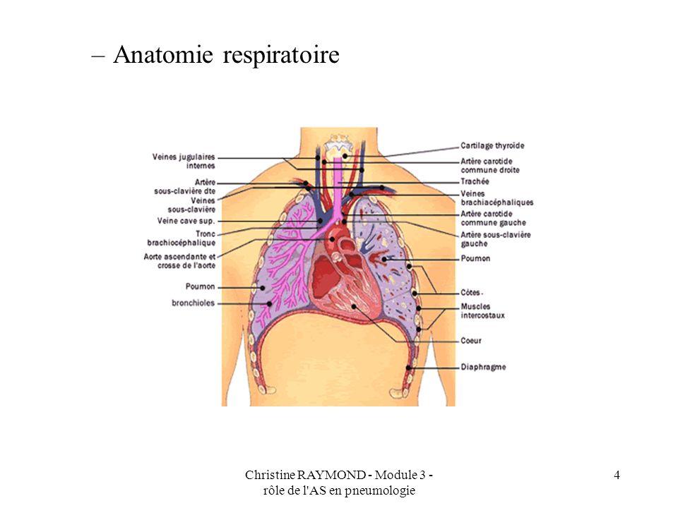 Christine RAYMOND - Module 3 - rôle de l AS en pneumologie 4 –Anatomie respiratoire
