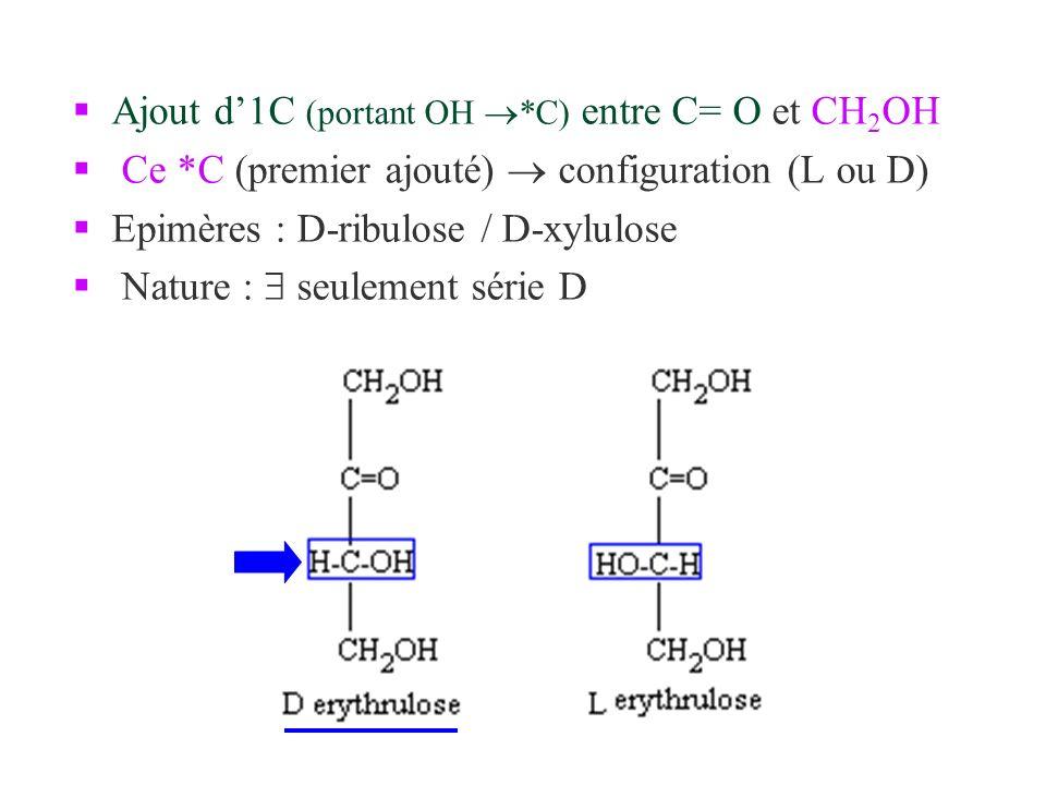 Ajout d1C (portant OH *C) entre C= O et CH 2 OH Ce *C (premier ajouté) configuration (L ou D) Epimères : D-ribulose / D-xylulose Nature : seulement sé