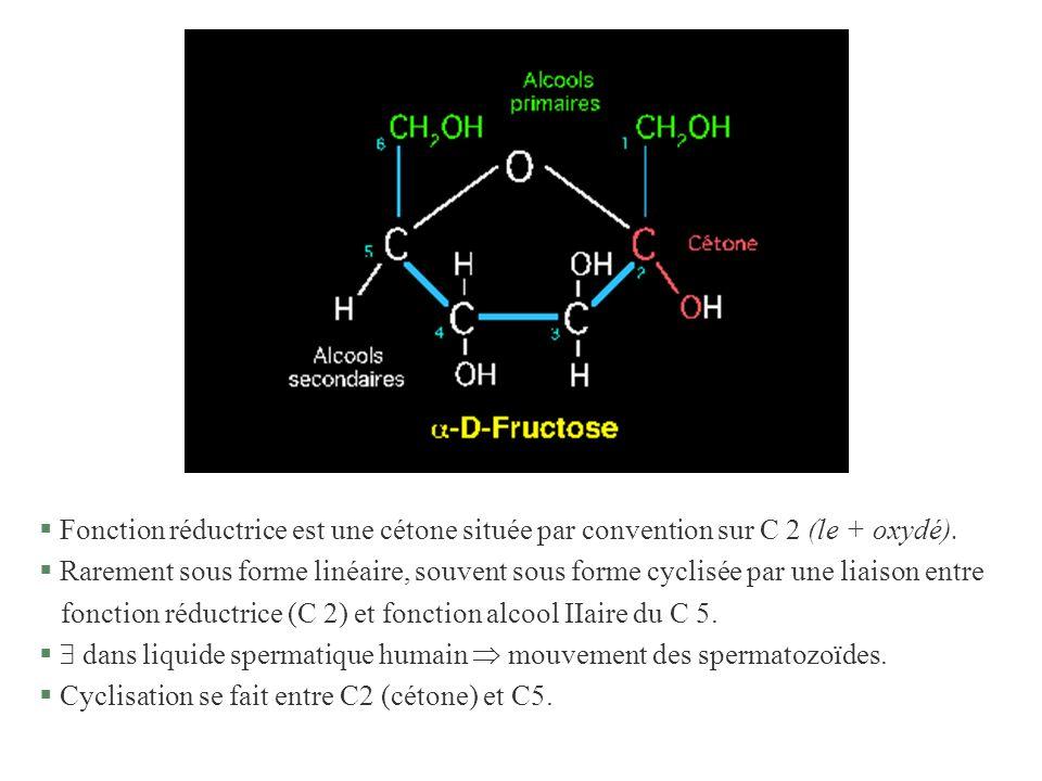 § Fonction réductrice est une cétone située par convention sur C 2 (le + oxydé). § Rarement sous forme linéaire, souvent sous forme cyclisée par une l