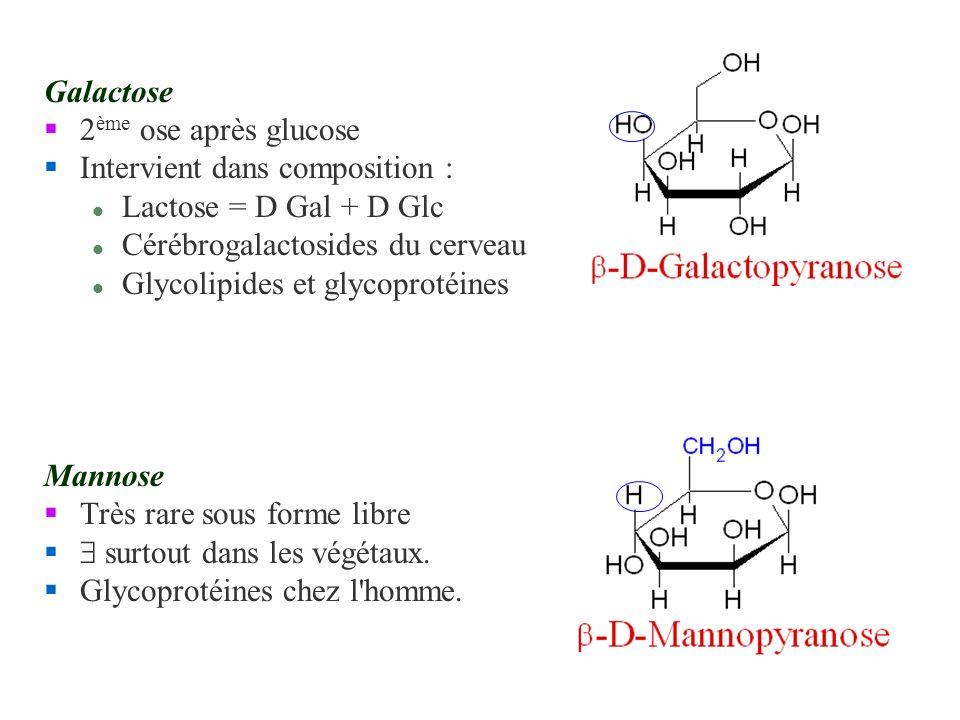 Galactose 2 ème ose après glucose §Intervient dans composition : l Lactose = D Gal + D Glc l Cérébrogalactosides du cerveau l Glycolipides et glycopro