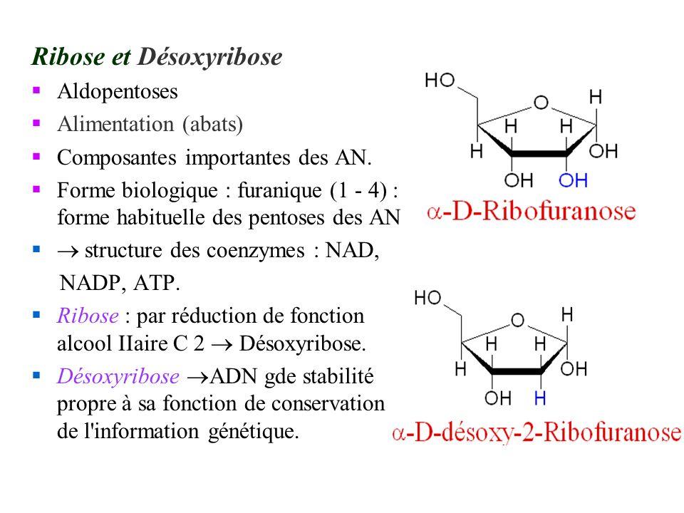 Ribose et Désoxyribose Aldopentoses Alimentation (abats) Composantes importantes des AN. Forme biologique : furanique (1 - 4) : forme habituelle des p