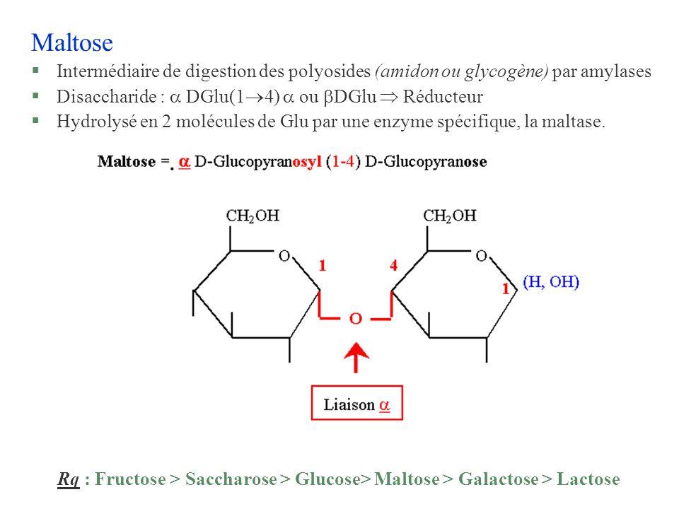 Maltose §Intermédiaire de digestion des polyosides (amidon ou glycogène) par amylases §Disaccharide : DGlu(1 4) ou DGlu Réducteur §Hydrolysé en 2 molé