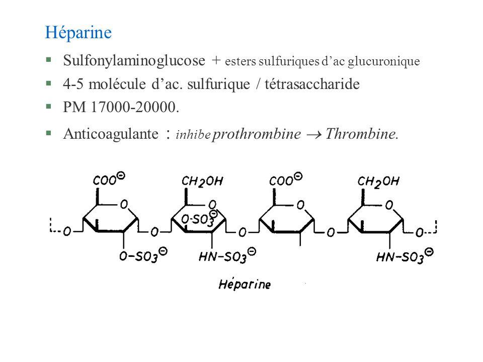 Héparine §Sulfonylaminoglucose + esters sulfuriques dac glucuronique §4-5 molécule dac. sulfurique / tétrasaccharide §PM 17000-20000. §Anticoagulante