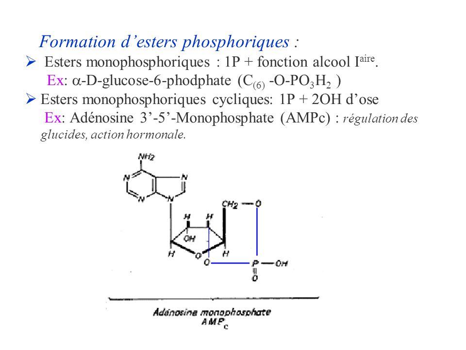 Formation desters phosphoriques : Esters monophosphoriques : 1P + fonction alcool I aire. Ex: -D-glucose-6-phodphate (C (6) -O-PO 3 H 2 ) Esters monop