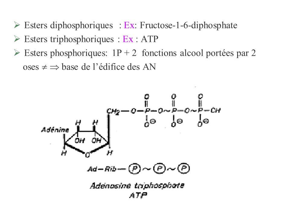 Esters diphosphoriques : Ex: Fructose-1-6-diphosphate Esters triphosphoriques : Ex : ATP Esters phosphoriques: 1P + 2 fonctions alcool portées par 2 o