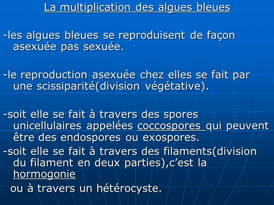 La multiplication des algues bleues -les algues bleues se reproduisent de façon asexuée pas sexuée. -le reproduction asexuée chez elles se fait par un