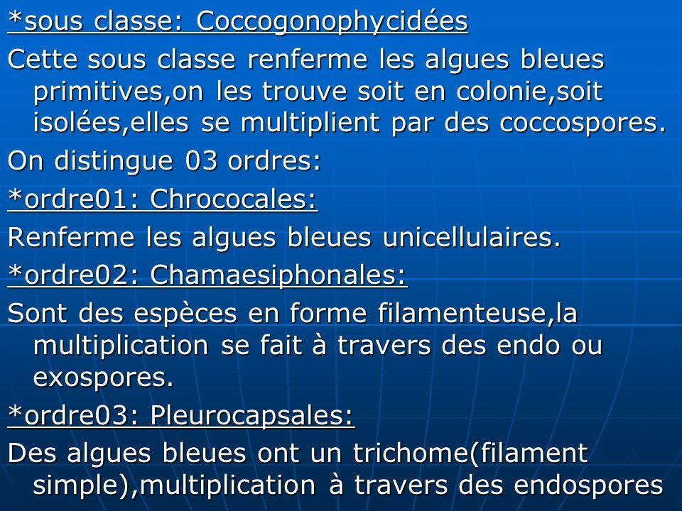 *sous classe: Coccogonophycidées Cette sous classe renferme les algues bleues primitives,on les trouve soit en colonie,soit isolées,elles se multiplie