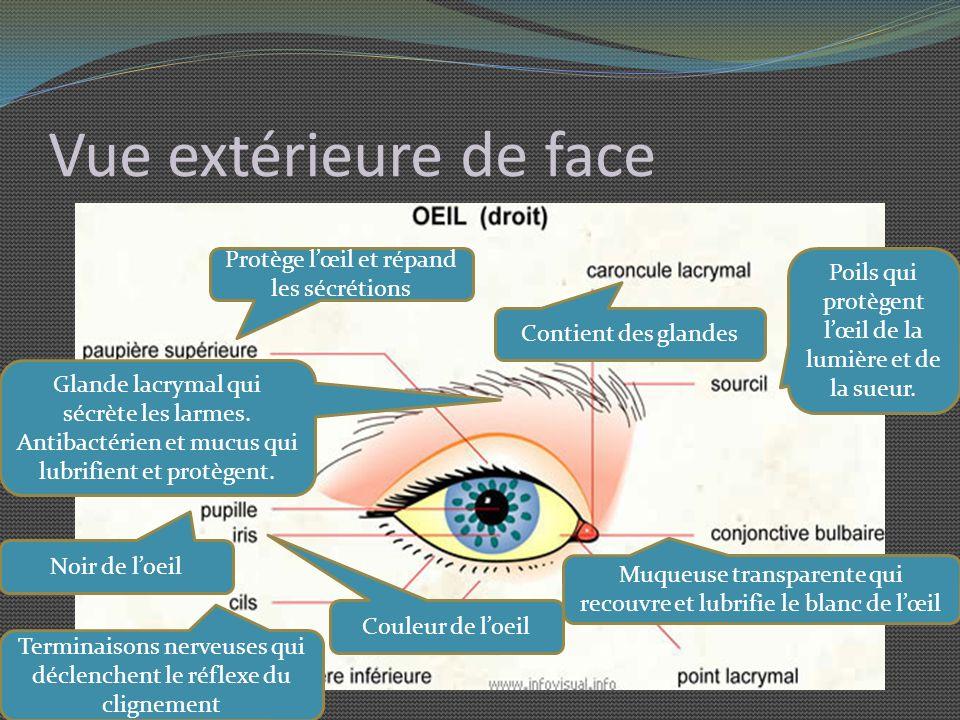 Quiz La tache aveugle de l oeil est située : A) au même endroit que la tache jaune.