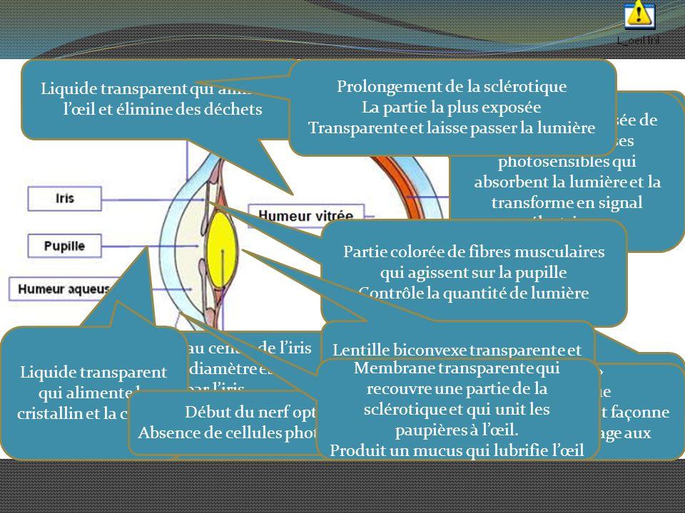 Référence Marieb, E.; Anatomie et physiologie humaines, Édition ERPI, 2005 http://www.fondationdesmaladiesdeloeil.org/phpwcm s/index.php?chiffres http://daltonien.free.fr/daltonien/article.php3?id_arti cle=6#nb1 http://perso.id-net.fr/~brolis/docs/oeil/accomode.html http://lecerveau.mcgill.ca/flash/d/d_02/d_02_cr/d_02 _cr_vis/d_02_cr_vis.html