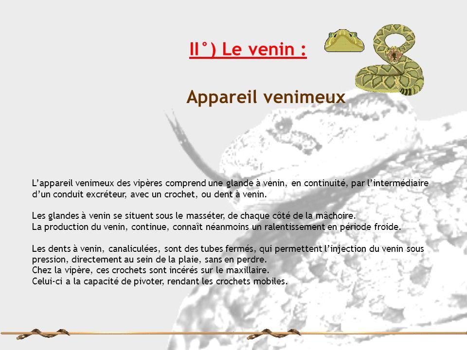 II°) Le venin : Appareil venimeux Lappareil venimeux des vipères comprend une glande à venin, en continuité, par lintermédiaire dun conduit excréteur,