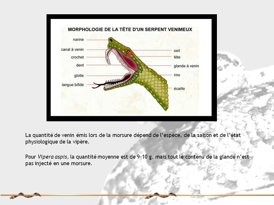 La quantité de venin émis lors de la morsure dépend de lespèce, de la saison et de létat physiologique de la vipère. Pour Vipera aspis, la quantité mo