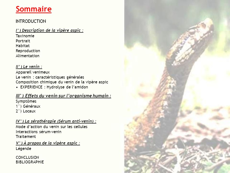 Sommaire INTRODUCTION I°) Description de la vipère aspic : Taxinomie Portrait Habitat Reproduction Alimentation II°) Le venin : Appareil venimeux Le v