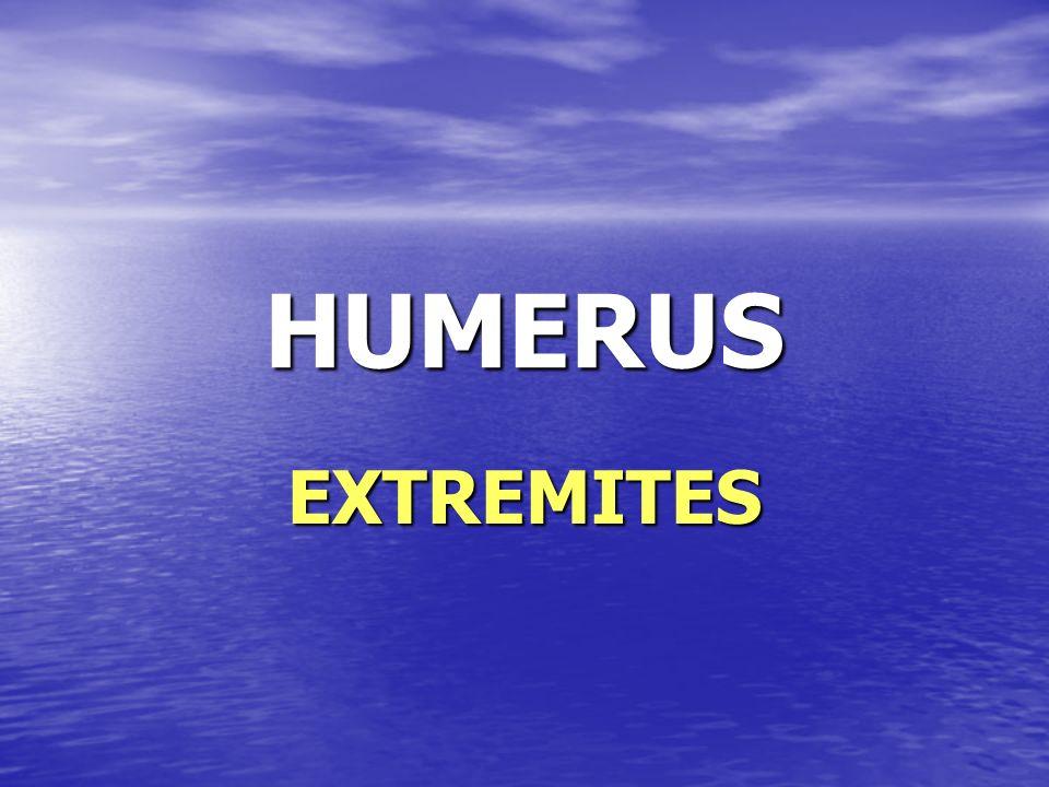 HUMERUS EXTREMITES