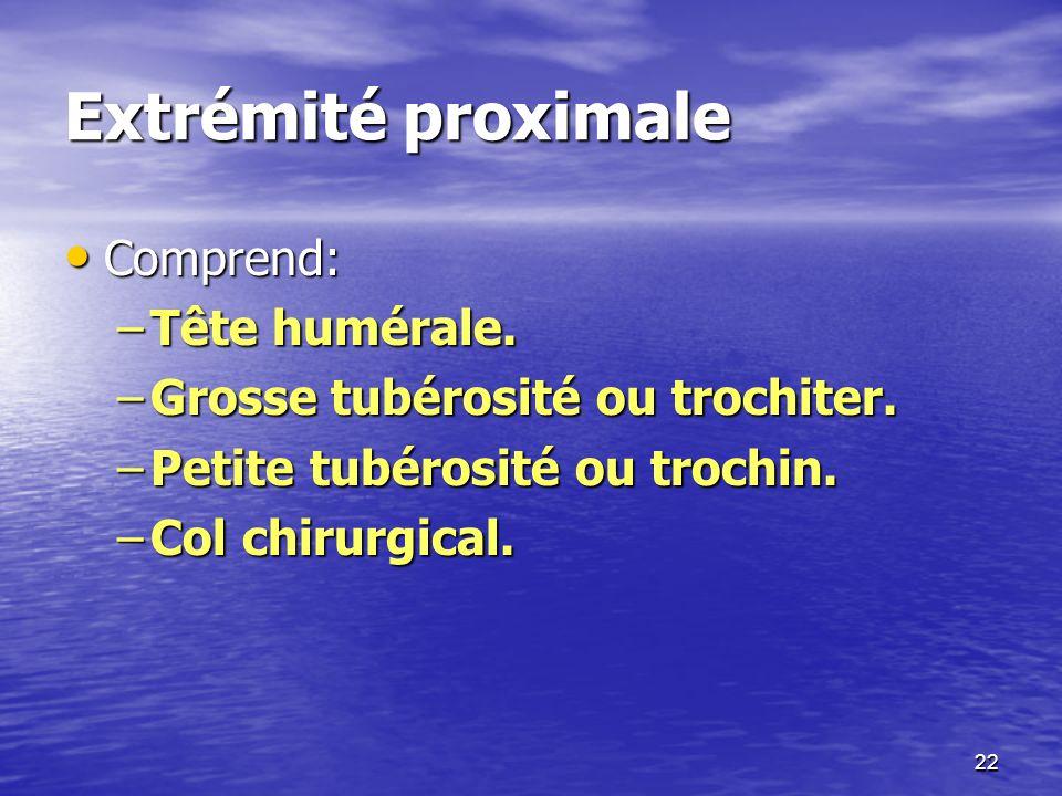 Extrémité proximale Comprend: Comprend: –Tête humérale. –Grosse tubérosité ou trochiter. –Petite tubérosité ou trochin. –Col chirurgical. 22