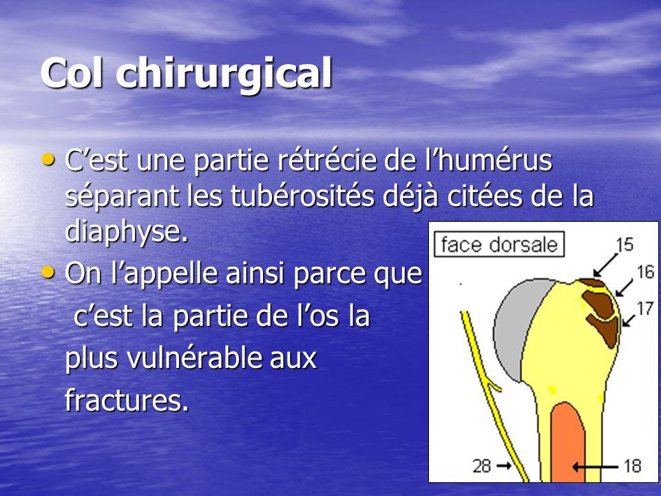 Col chirurgical Cest une partie rétrécie de lhumérus séparant les tubérosités déjà citées de la diaphyse. Cest une partie rétrécie de lhumérus séparan