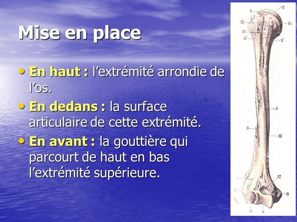 1: tête humérale 2: trochiter 3: trochin 4: coulisse bicipitale 5: V deltoïdien 6: trochlée (art.