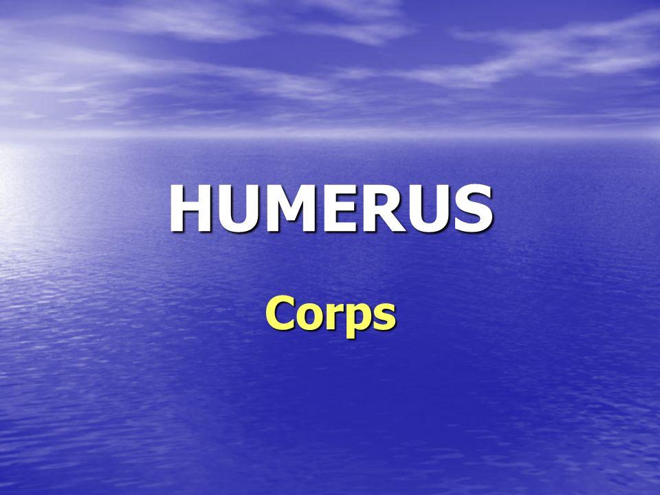 HUMERUS Corps