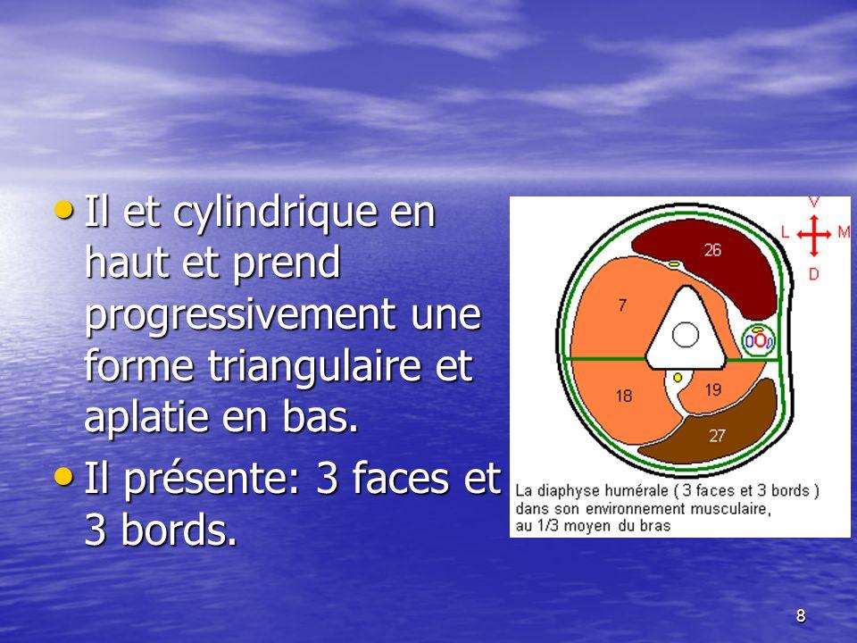 Il et cylindrique en haut et prend progressivement une forme triangulaire et aplatie en bas. Il et cylindrique en haut et prend progressivement une fo