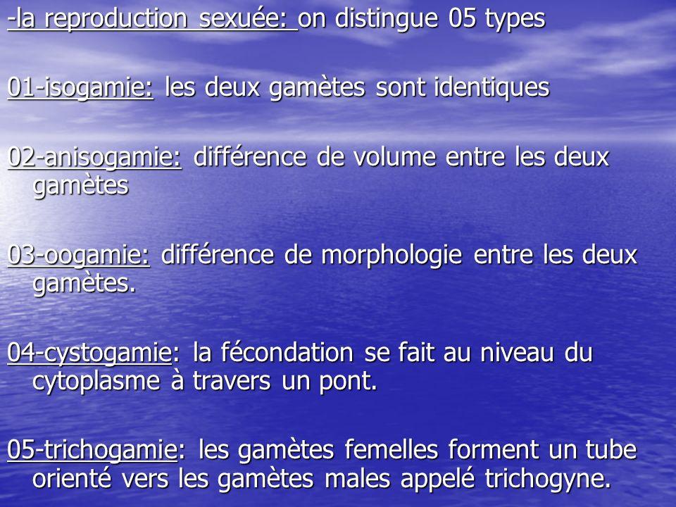 Cours03 -plan du cours: -caractères cytologiques des végétaux: -parois -parois -plastes -plastes -cycles de développement -cycles de développement