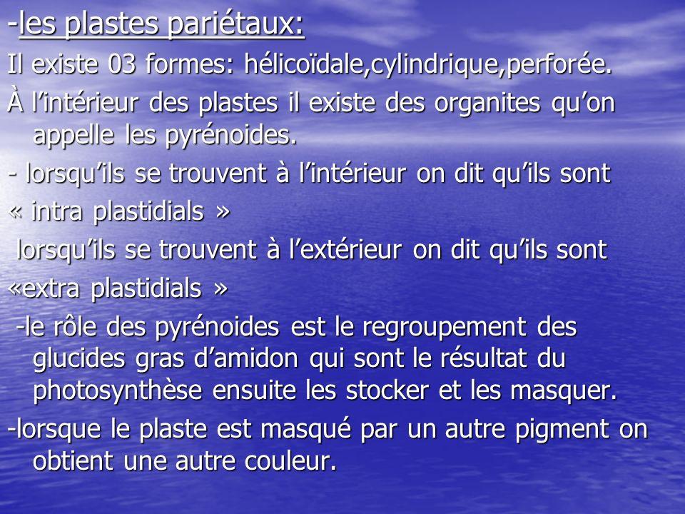 -les pigments 01-la chlorophylle: Il existe plusieurs types de chlorophylle: -chlorophylle A chez toutes les algues -chlorophylle A chez toutes les algues -chlorophylle B chez les chlorophycophytes, -chlorophylle B chez les chlorophycophytes, euglinophytes,algues vertes euglinophytes,algues vertes -chlorophylle C pyrophycophytes,algues -chlorophylle C pyrophycophytes,algues brunes brunes -chlorophylle D rodophycophytes,algues -chlorophylle D rodophycophytes,algues rouges rouges