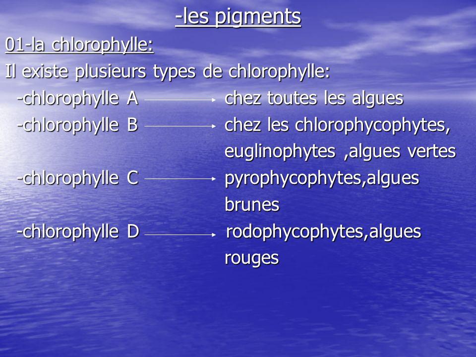 02-les caroténoïdes: Des pigments jaunes oranges,on distingue deux types: -caroténoïde alpha -caroténoïde alpha -caroténoïde bêta -caroténoïde bêta03-xanthphylle: -fucoxanthiene -fucoxanthiene -dinoxanthine -dinoxanthine -peridine -peridine04-phycobillines: -phycocyanine algues bleues -phycocyanine algues bleues -phycoérythrine algues rouges -phycoérythrine algues rouges