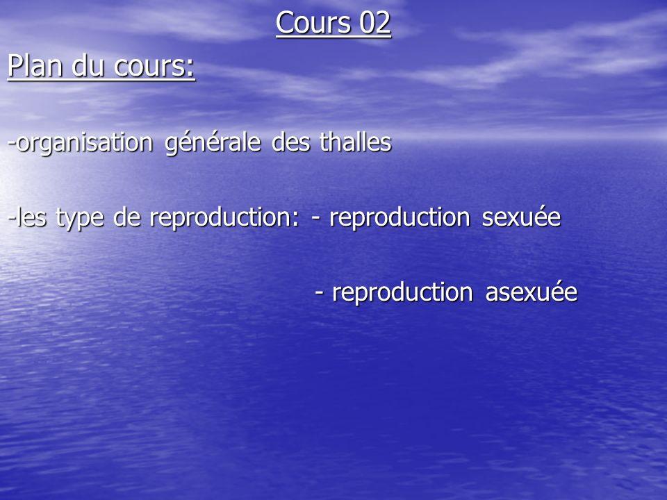 I)Organisation générale des thalles: Définitions:Thalle: appareil végétative qui ne possède ni racines ni tiges ni feuilles.