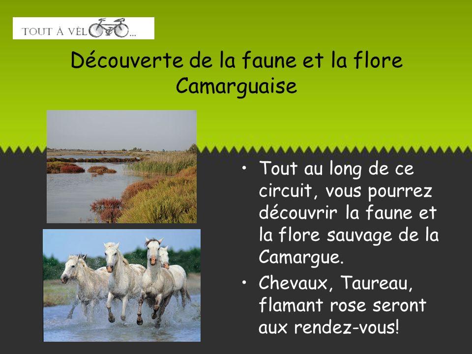 Découverte de la faune et la flore Camarguaise Tout au long de ce circuit, vous pourrez découvrir la faune et la flore sauvage de la Camargue. Chevaux
