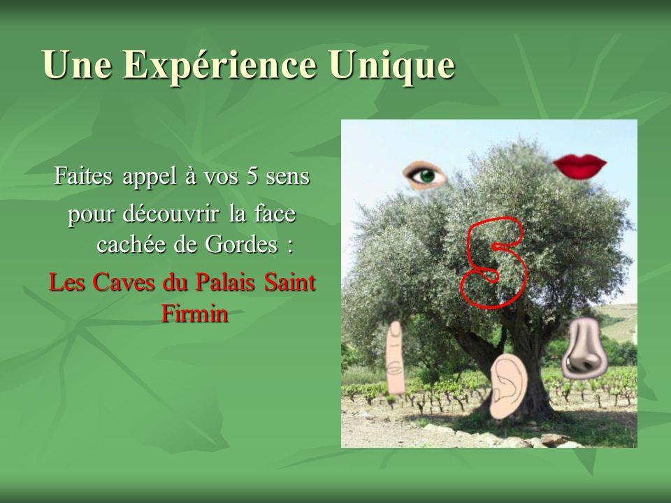 Une Expérience Unique Faites appel à vos 5 sens pour découvrir la face cachée de Gordes : Les Caves du Palais Saint Firmin