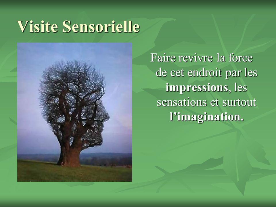 Visite Sensorielle Faire revivre la force de cet endroit par les impressions, les sensations et surtout limagination.