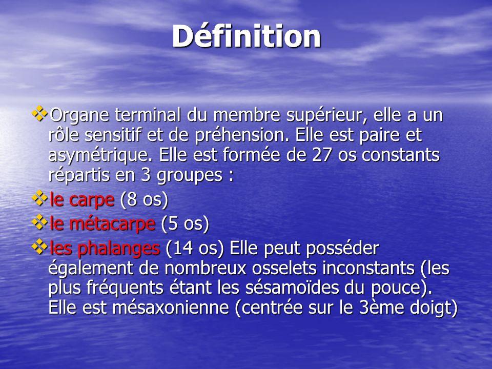 Définition Organe terminal du membre supérieur, elle a un rôle sensitif et de préhension. Elle est paire et asymétrique. Elle est formée de 27 os cons