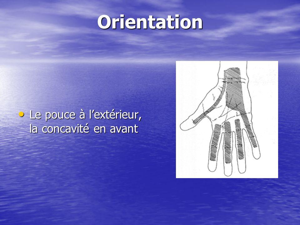Forme anatomique générale Creuse a tous les niveaux, concave vers lavant Carpe : 8 os pairs et asymétriques placés sur 2 rangées.