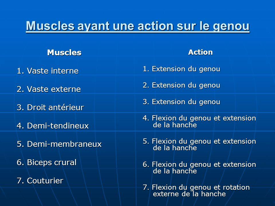 Muscles ayant une action sur le genou Muscles 1. Vaste interne 2. Vaste externe 3. Droit antérieur 4. Demi-tendineux 5. Demi-membraneux 6. Biceps crur