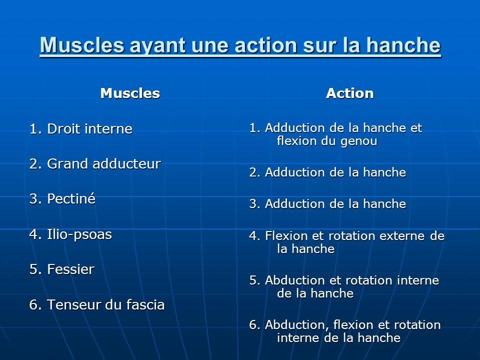 Muscles ayant une action sur la hanche Muscles 1. Droit interne 2. Grand adducteur 3. Pectiné 4. Ilio-psoas 5. Fessier 6. Tenseur du fascia Action 1.