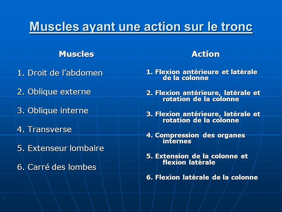 Muscles ayant une action sur le tronc Muscles 1. Droit de labdomen 2. Oblique externe 3. Oblique interne 4. Transverse 5. Extenseur lombaire 6. Carré