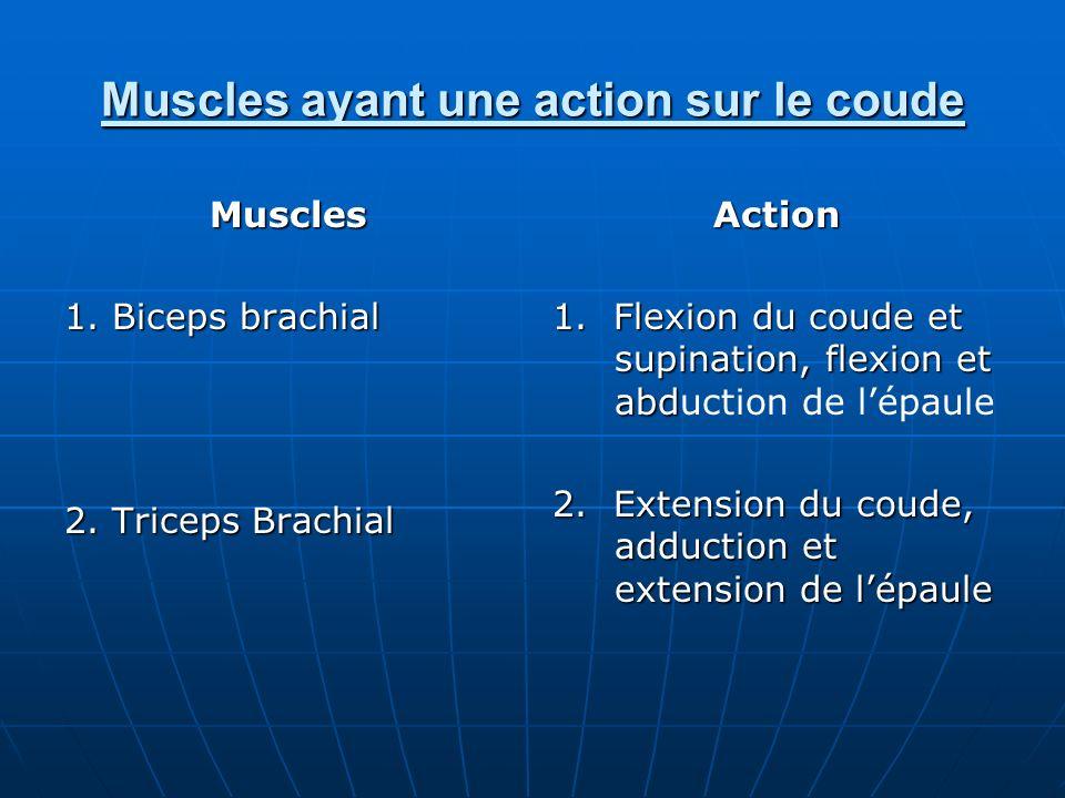 Muscles ayant une action sur le coude Muscles 1. Biceps brachial 2. Triceps Brachial Action 1. Flexion du coude et supination, flexion et abd 1. Flexi