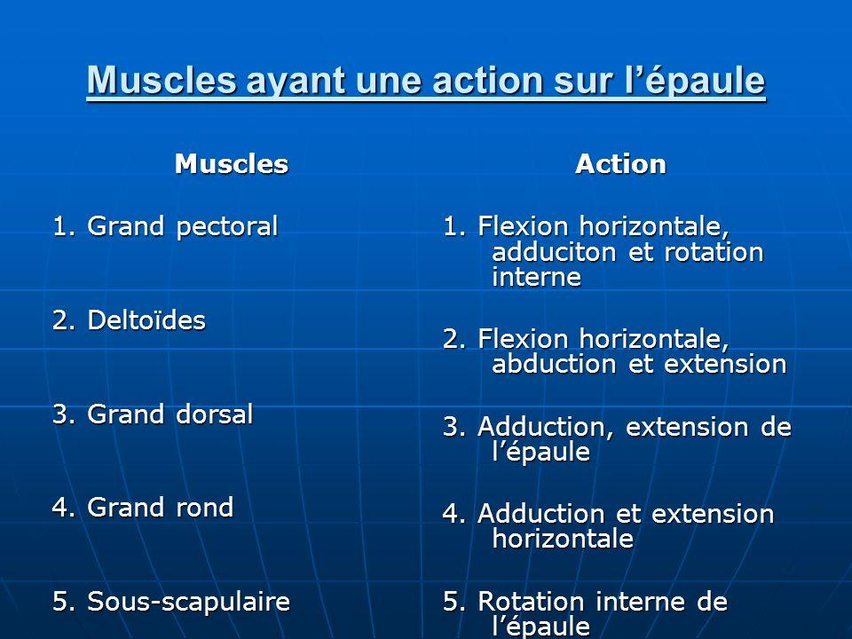 Muscles ayant une action sur lépaule Muscles 1. Grand pectoral 2. Deltoïdes 3. Grand dorsal 4. Grand rond 5. Sous-scapulaire Action 1. Flexion horizon
