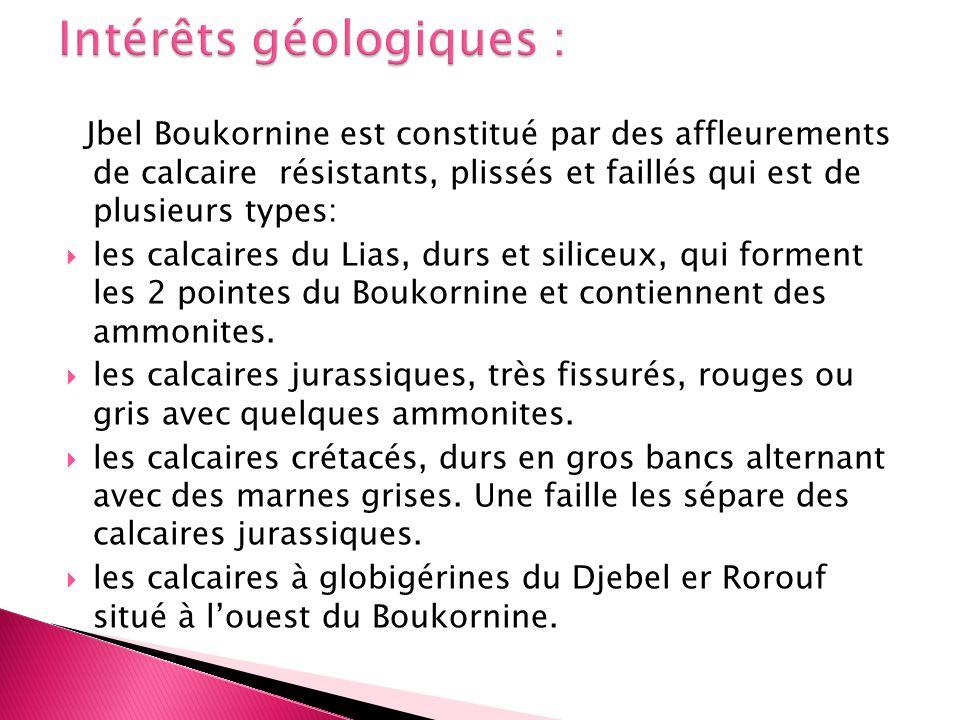 Jbel Boukornine est constitué par des affleurements de calcaire résistants, plissés et faillés qui est de plusieurs types: les calcaires du Lias, durs