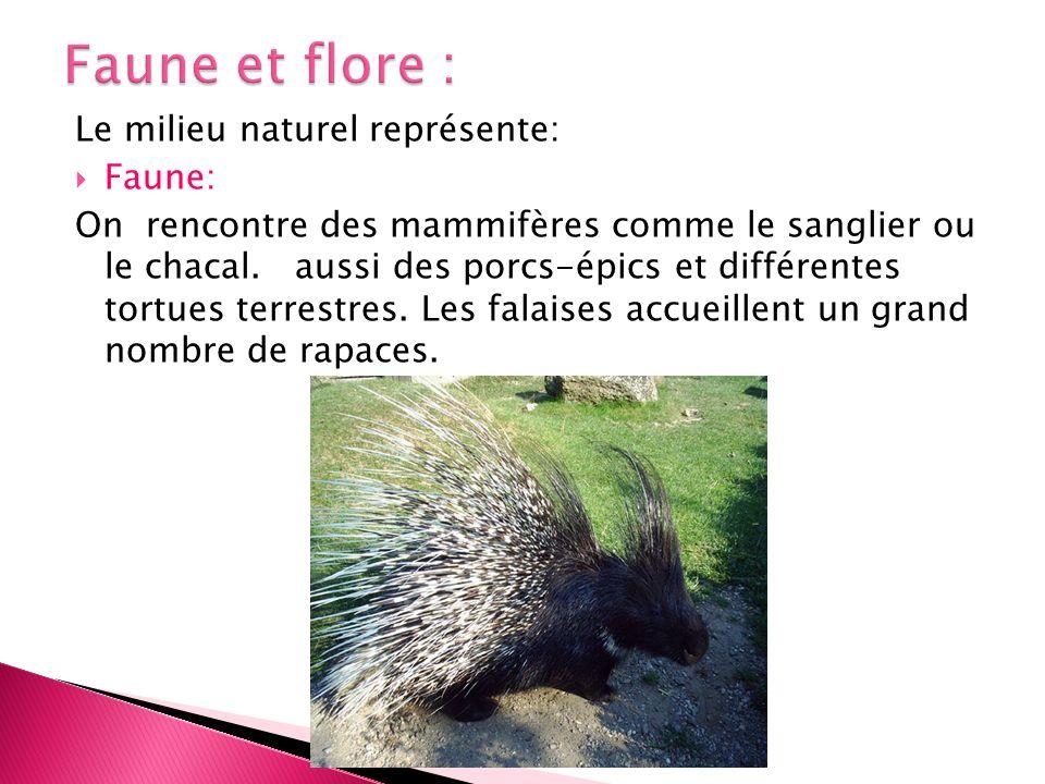 Le milieu naturel représente: Faune: On rencontre des mammifères comme le sanglier ou le chacal. aussi des porcs-épics et différentes tortues terrestr