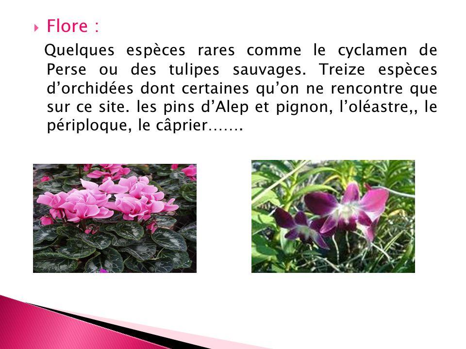 Flore : Quelques espèces rares comme le cyclamen de Perse ou des tulipes sauvages. Treize espèces dorchidées dont certaines quon ne rencontre que sur