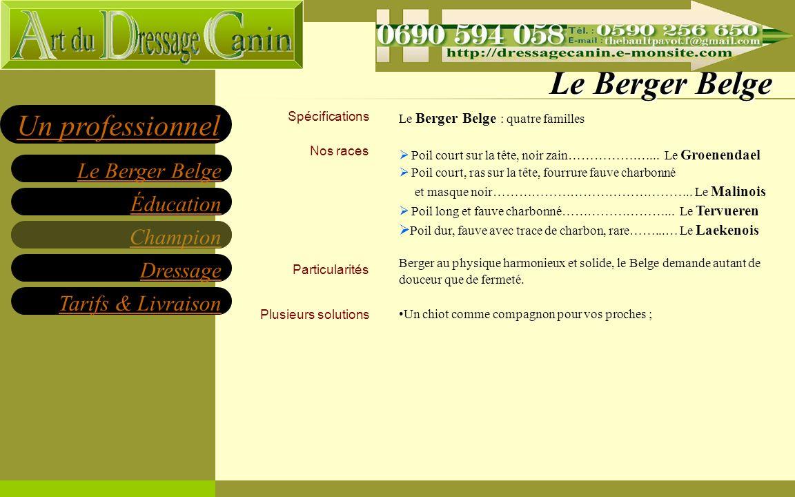Éducation Champion Dressage Tarifs & Livraison Le Berger Belge Un professionnel Des compagnons éduqués