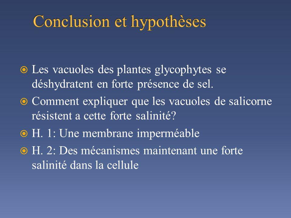 Les vacuoles des plantes glycophytes se déshydratent en forte présence de sel. Comment expliquer que les vacuoles de salicorne résistent a cette forte